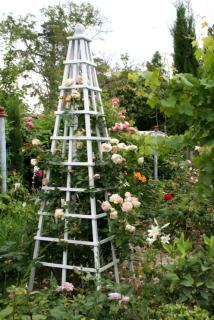 Pyramid cage for a climbing rose to grow on